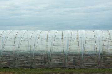 Agrarlandschaft6